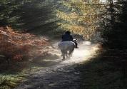 horseThumb2